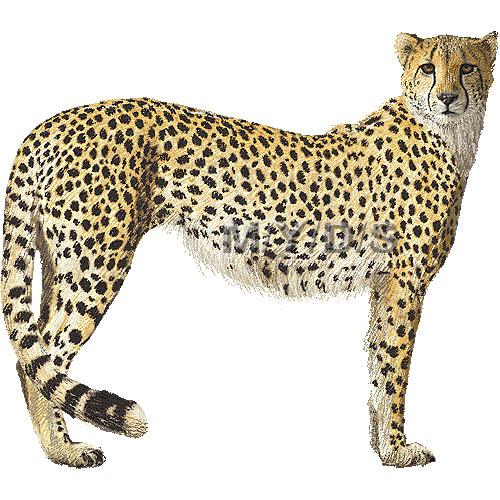 u30c1 u30fc u30bf u30fc u306e u30a4 u30e9 u30b9 u30c8 u30fb u6761 u4ef6 u4ed8 u30d5 u30ea u30fc u7d20 u6750 u96c6 cheetah clipart black cheetah clipart image