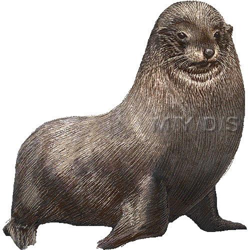 膃肭臍)オットセイのイラスト・条件付フリー ...: myds.jp/animal/animal/fur-seal