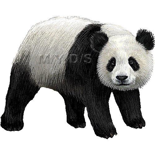 ジャイアント パンダのイラスト