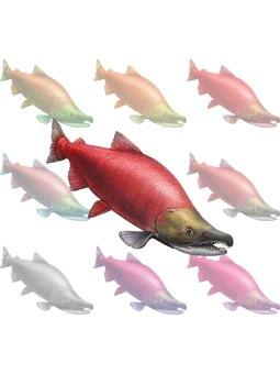 ポスカ・ベニシャケ/条件付フリー素材 イメージ画像タイプ (紅鮭)ベニザケ/シャケの壁紙・背景画