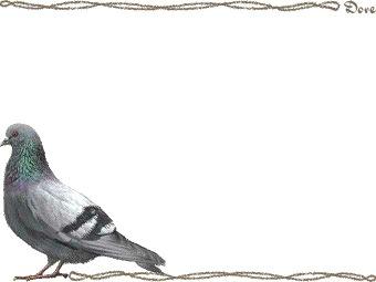 カワラバト・ドバト/(鳩)ハトの年賀状/非商用無... カワラバト・ドバト/(鳩)ハトのイラスト