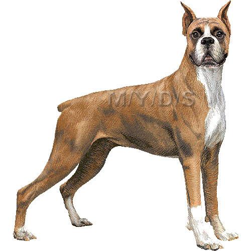 World S Fiercest Dog