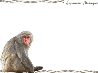 Japanese Macaque Snow Monkey : 中1 プリント : プリント
