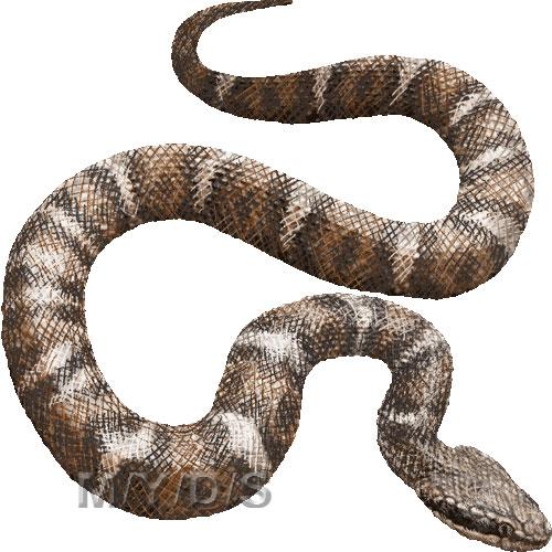 蛇)ニホンマムシのイラスト/条件付フリー素材集