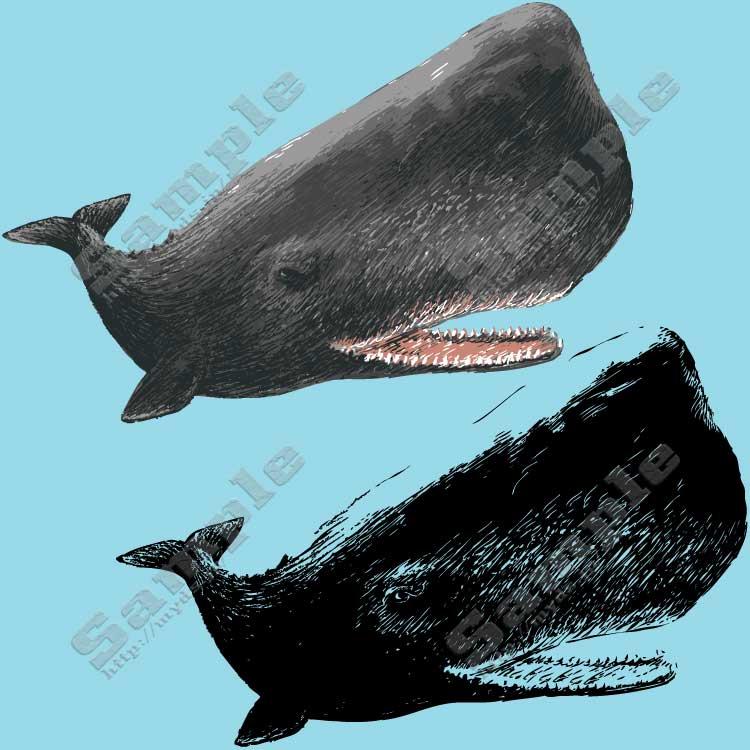 マッコウクジラの画像 p1_30