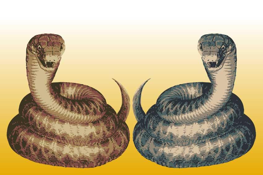 トグロ蛇<蛇・巳年(へびどし ... : 年賀状 用紙 : 年賀状