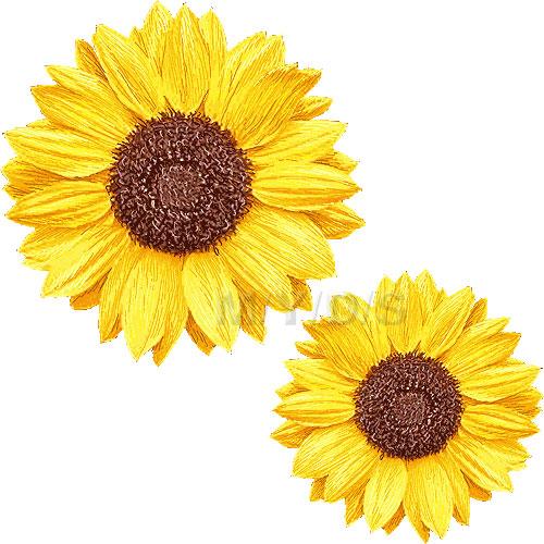 向日葵の花 ヒマワリの花のイラスト 条件付フリー素材集