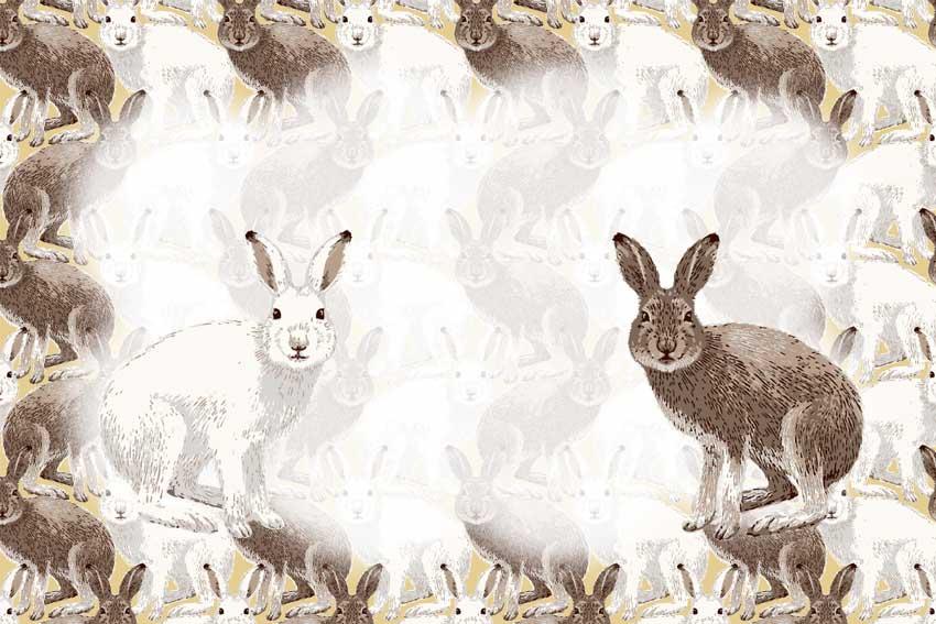 ユキウサギの画像 p1_32